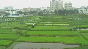 First view of agriculture, outside Shenzhen